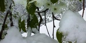 Prognoza: Snijeg u većem dijelu zemlje