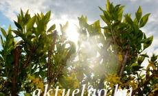 Prognoza: Nakon kiše stiže promjena, očekuje nas sunčani vikend