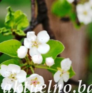 Dobrodošlo proljeće