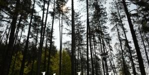 Vlada TK: Utvrđen prijedlog Zakona o šumama