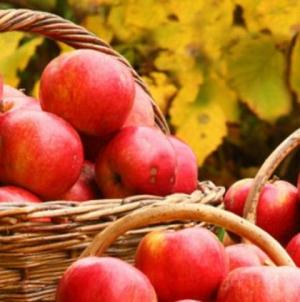 Rusija ponovo zabranila uvoz jabuka iz BiH
