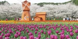 Bajkoviti cvjetni prizori: Ovo je najljepši vjesnik proljeća