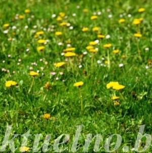 Danas sunčano i temperature do 25 C, narednih dana oblačno vrijeme