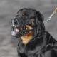 MUP TK: Kazne do 1.000 KM za izvođenje pasa bez povoca i brnjice