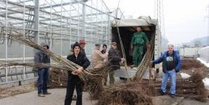 """Isporuka sadnica voća u okviru projekta """"Poljoprivredom do bržeg lokalnog ekonomskog razvoja"""""""
