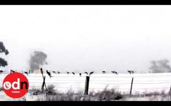Nesvakidašnji prizor: Hladni val zahvatio Australiju