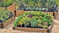 INZ: Korisni savjeti – koliko zemljišta i posla je potrebno da prosječna bh. porodica proizvodi hranu za sebe