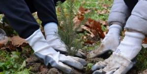 """Sedma terenska akcija sadnje drveća """"Let's Do It – milion sadnica za 1 dan"""" u Gradu Tuzla"""
