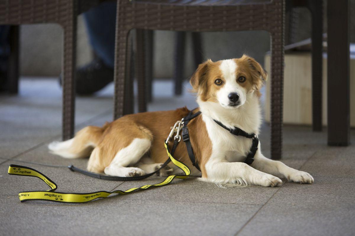 Dogs Trust i UNDP u BiH: Saradnja u rješavanju problema napuštenih pasa