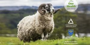 Uoči Kurban-bajrama: Preporuke INZ-a u vezi klanja kurbana, zbrinjavanja mesa i otpada