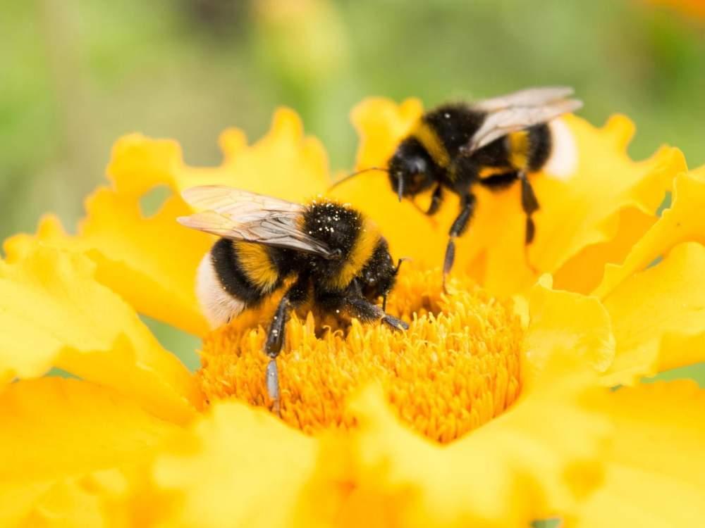 Svjetski dan pčela: Koliko smo zaista svjesni njihovog značaja?