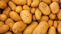Medžlis IZ Janja proizveo 75 tona krompira, dio prinosa obrazovnim institucijama