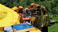 Peti Međunarodni kongres pčelarstva u Tuzli