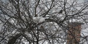 Jutros u BiH oblačno vrijeme, ponegdje u Bosni pada slab snijeg