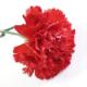 Čestitka premijera Kadrije Hodžića u povodu 8. marta – Međunarodnog dana žena