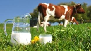 Danas je Svjetski dan mlijeka kojeg ne koristimo dovoljno – upoznajmo njegove prednosti